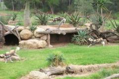 zoo09_1536x2048