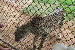 zoo14_1536x2048