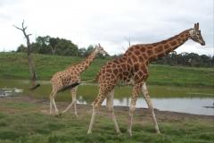 zoo18_1536x2048