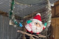 Studebaker Christmas 2014-20